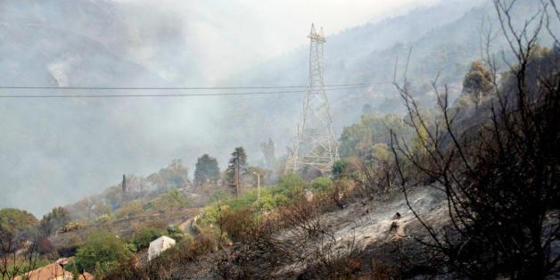 Une forêt après un incendie à Chréa, Blida - Photo d'archive