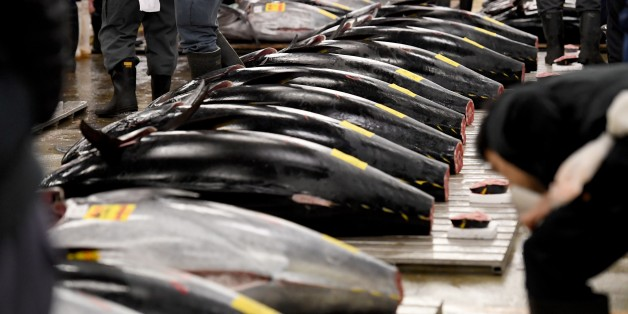 Fishmongers check bluefin tuna prior to the new year's first auction at the Tsukiji fish market in Tokyo on January 5, 2017.  A 212-kilogram bluefin tuna was traded at 74.2 million yen (about 632,600 USD) at the wholesale market on the first trading day of the new year. / AFP / TOSHIFUMI KITAMURA        (Photo credit should read TOSHIFUMI KITAMURA/AFP/Getty Images)
