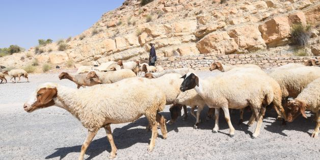 A Tunisian shepherd herds his sheep near the dry reservoir bed of the El-Haouareb dam, located near Kairouan, some 160 kilometres south of Tunis, on July 13, 2017. The region has been facing acute water shortages due to drought conditions.  / AFP PHOTO / FETHI BELAID        (Photo credit should read FETHI BELAID/AFP/Getty Images)