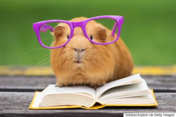 glasses teacher