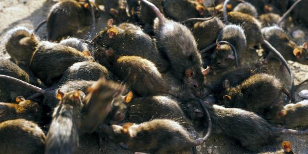 Ein Mädchen lag in seinem Bett und wurden von Ratten angegriffen.