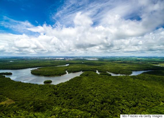 amazon forest brazil