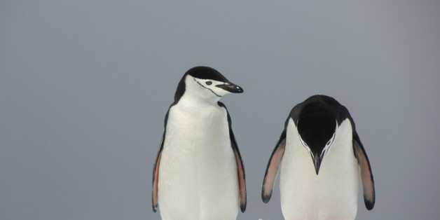 *** EXCLUSIVE ***