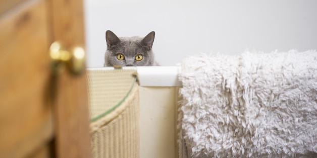 Münchner wollte nur schnell duschen gehen - die Katze im Bad rettete ihm das Leben