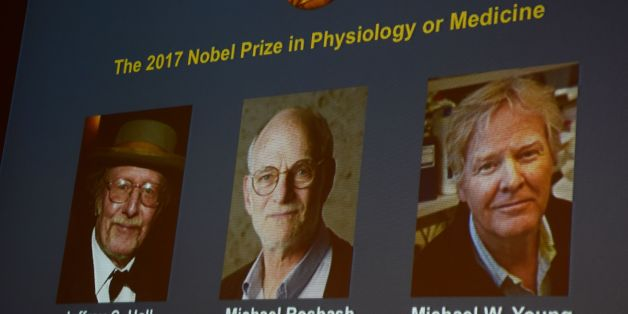 Winners of the 2017 Nobel Prize in Physiology or Medicine (L-R) Jeffrey C Hall, Michael Rosbash and Michael W Young are pictured on a display during a press conference at the Karolinska Institute in Stockholm on October 2, 2017.US trio Jeffrey C. Hall, Michael Rosbash and Michael W. Young won the 2017 Nobel Medicine Prize for their work on internal biological clocks known as the circadian rhythm.The 2017 Nobel prize season kicks off with the announcement of the medicine prize, to be followed ove