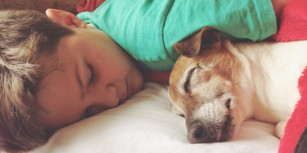 Boy sleeping with his dog, a female senior Jack Russell Terrier