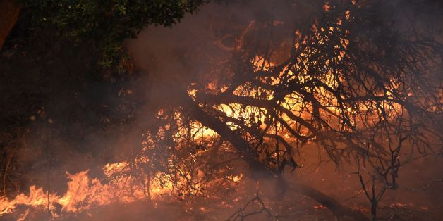 Trees burn on the edges of a vineyard where firefighters set backfires to protect the grape vines, in Santa Rosa, California, October 11, 2017. More than 200 fire engines and firefighting crews from around the country were being rushed to California on Wednesday to help battle infernos which have left at least 21 people dead and thousands homeless. / AFP PHOTO / Robyn Beck        (Photo credit should read ROBYN BECK/AFP/Getty Images)