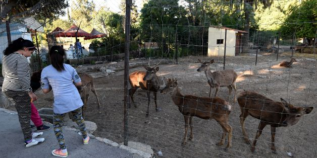 Tunisian visitors play with antelopes at the Belvedere Zoo, which was closed for renovation works following an attack on a crocodile a month earlier, in the capital Tunis on April 13, 2017.The Belvedere Zoo in central Tunis that closed after visitors stoned a crocodile to death has re-opened following a month-long cleanup, after installing new signs, banning food and plastic bags and brining in more guards in an effort to encourage better visitor behaviour. / AFP PHOTO / FETHI BELAID        (Pho