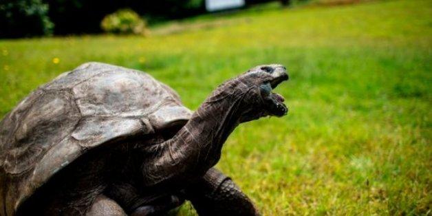 세계 최고령 거북이 조나단은 보질 못하고 냄새도 못 맡지만 청각은 훌륭하다