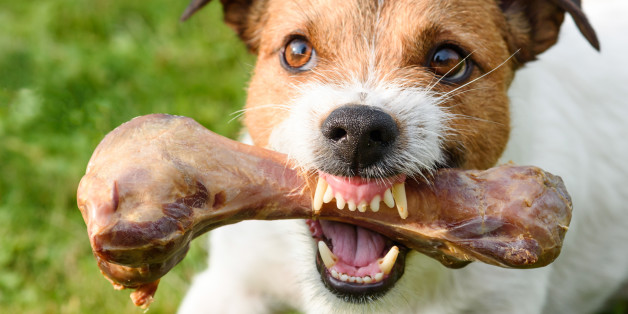 Dog demonstrating teeth and fangs