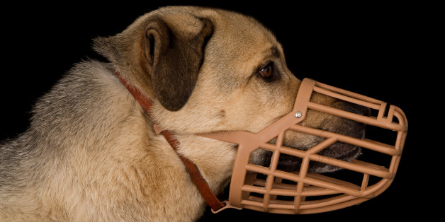 Profile of a crossbreed dog wearing a plastic basket dog muzzle.