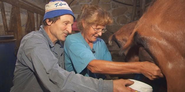 Bei André (60), dem charmanten Schweizer, müssen die Ziegen gemolken werden
