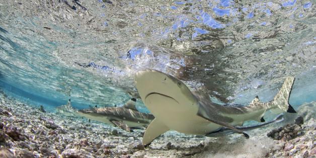 Im Bochumer Tierpark sind zwei Haie und mehrere Korallenfische gestorben. Das war bereits vergangene Woche. Damals gingen die Verantwortlichen von einem technischen Defekt aus.