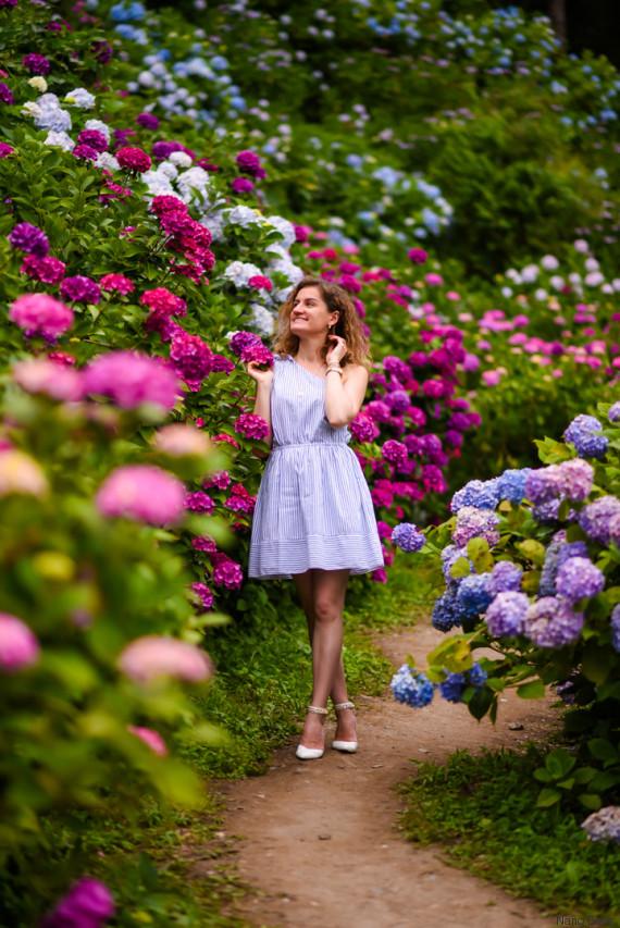 hydrangea garden in chiba japan