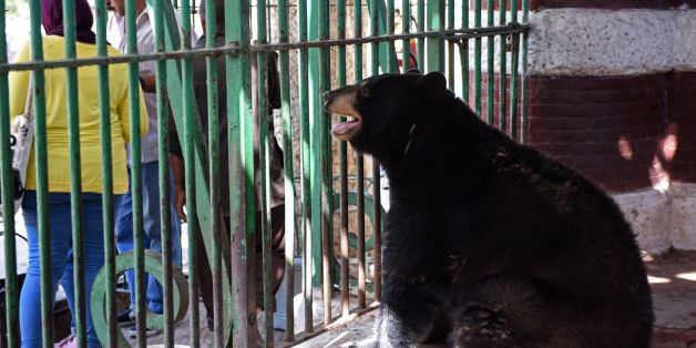 A black bear is seen in an enclosure at Egypt's Giza Zoo in Cairo on August 1, 2017.The confined spaces for the animals was one of the reasons Giza Zoo lost its accreditation with the World Association of Zoos and Aquariums in 2004. It was built in 1891, not long after the inauguration of the Suez Canal, and extends over about 344,000 square metres (410,000 sq yards) planted with exotic trees from abroad. / AFP PHOTO / MOHAMED EL-SHAHED        (Photo credit should read MOHAMED EL-SHAHED/AFP/Gett
