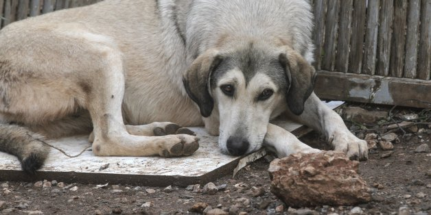 ATHENS, GREECE - NOVEMBER 18: A dog is seen after torrential rains struck the west Athenian suburb of Mandra, Greece on November 18, 2017. At least sixteen people have been reported dead in floods which happened after torrential rains struck Mandra.  (Photo by Ayhan Mehmet/Anadolu Agency/Getty Images)