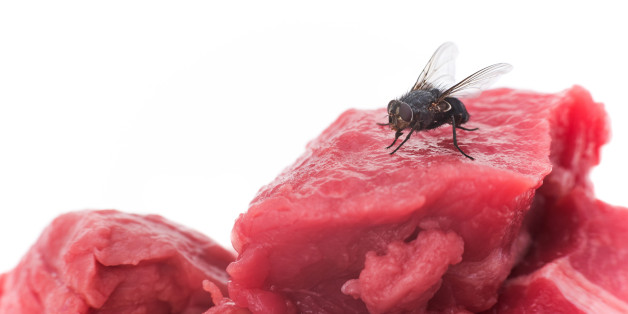 A housefly on a piece of raw meat - white background