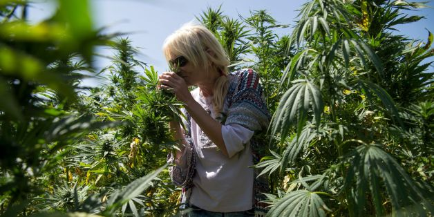 A German tourist smells cannabis plants as she stands in a cannabis field near the town of Ketama in Morocco's northern Rif region on September 13, 2017.Moroccan law bans the sale and consumption of the drug. But that hasn't stopped farmers in Ketama growing vast plantations of it, providing a living to some 90,000 households. Northern Morocco, a key production centre for hashish headed for Europe, has also seen an influx of European visitors eager to sample the region's weed. / AFP PHOTO / FADE