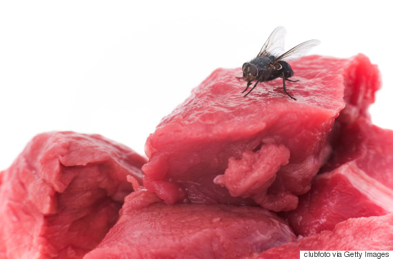fly meat