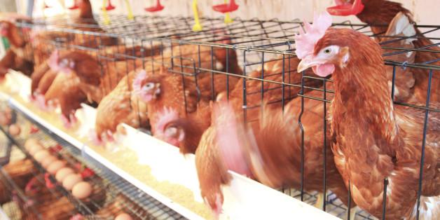 Nouveaux audits européens au Maroc dans le but d'exporter viandes et poissons vers l'UE
