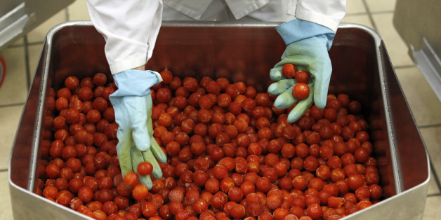 "A worker inspects tomatoes in one of Paolo Ricciulli's factories in Parma November 11, 2011. Ricciulli, awarded a ""Knight of Labour"" honour for his business achievements, employs around 220 people at his Althea-Delfino group, Italy's biggest manufacturer of ready-made pasta sauce, with revenues of 62 million euros and two plants in Parma and Acerra, near Naples; 80 percent of his output is exported. Companies in Italy, France and Germany, the three largest economies in the euro zone, are reacting to the bloc's debt emergency with varying degrees of nonchalance and alarm, mainly depending on how much their clients, and their own business models, are reliant on loans.Residential home builders and the companies that supply them are worried about how skyrocketing sovereign debt yields will affect mortgage rates and new home purchases. Retailers are cutting jobs and trying to trim other costs. But many also say the crisis could create business opportunities, spur a healthy industry shake-out and possibly even encourage better labour practices. To match Feature EUROZONE-BUSINESS/   REUTERS/Alessandro Garofalo (ITALY - Tags: BUSINESS FOOD)"