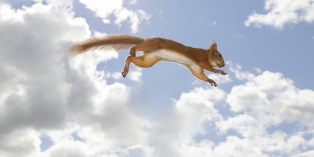 Red squirrel against sky in mid-air after jump, Bispgarden, Jamtland, Sweden