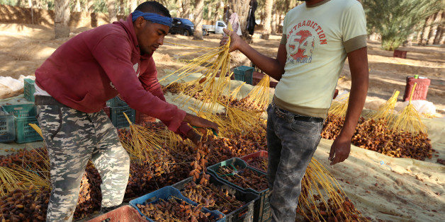 Tunisian youths sort freshly picked dates at a farm in Jemna, southern Tunisia October 17, 2016. Picture taken October 17, 2016.  To match Insight TUNISIA-POLITICS/ REUTERS/Zoubeir Souissi