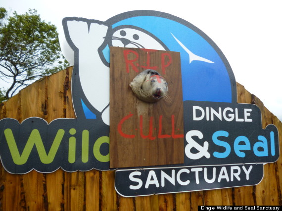 dingle wildlife and seal sanctuary