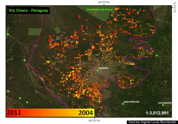 deforestation tracker