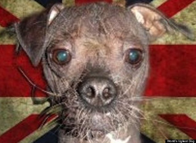 World's Ugliest Dogs C...