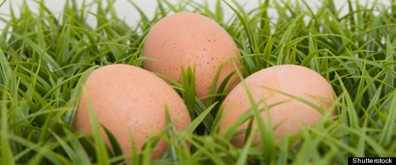 eggs vitamin d