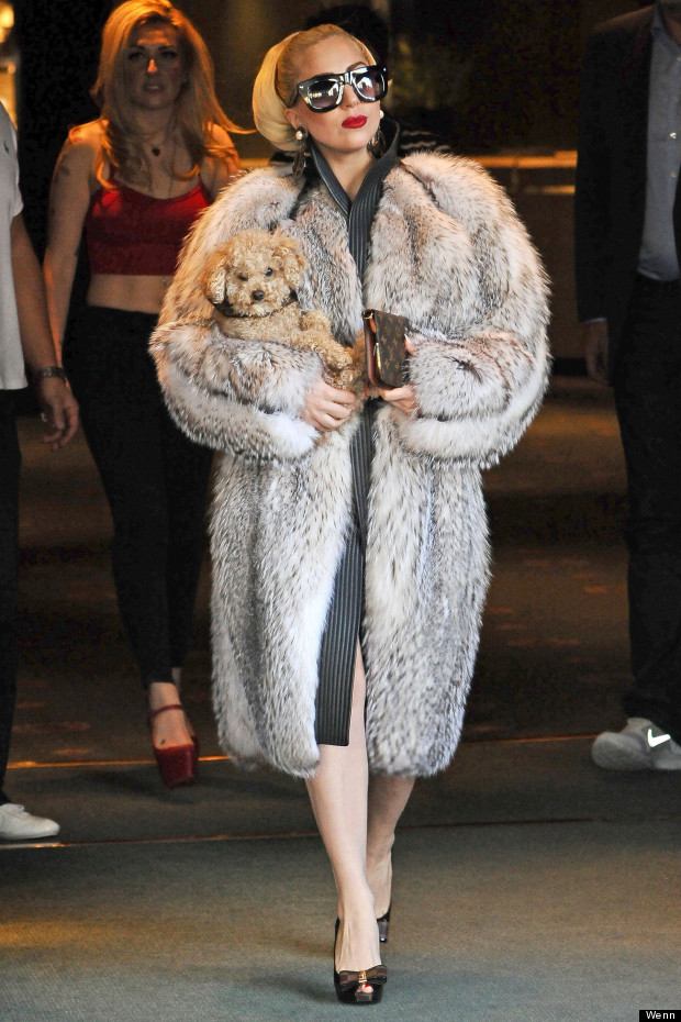 lady gaga puppy
