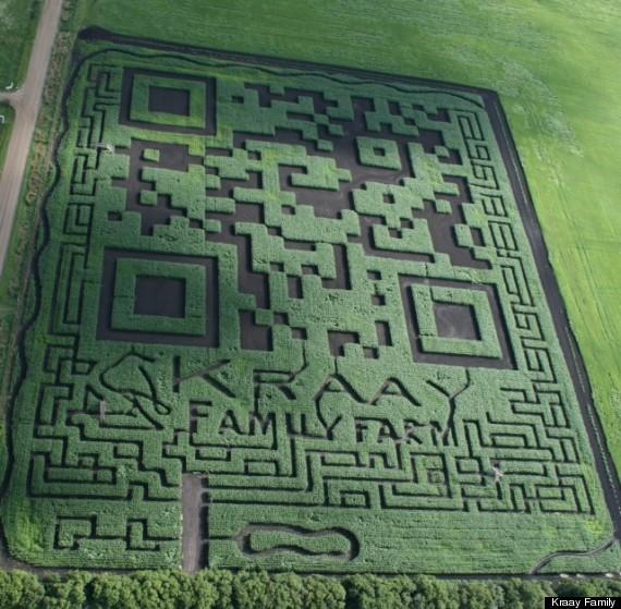 corn maze guiness