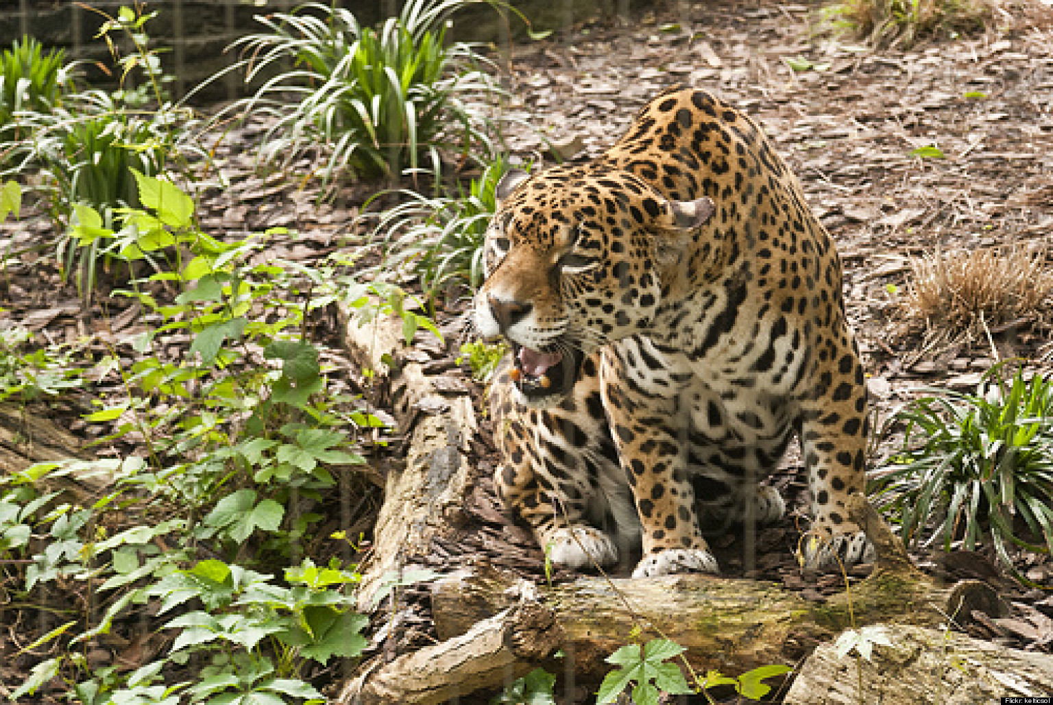 Hamptons Jaguar On The Loose? Officers Investigating ...