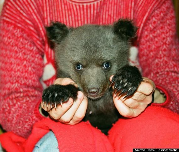 adopted bear