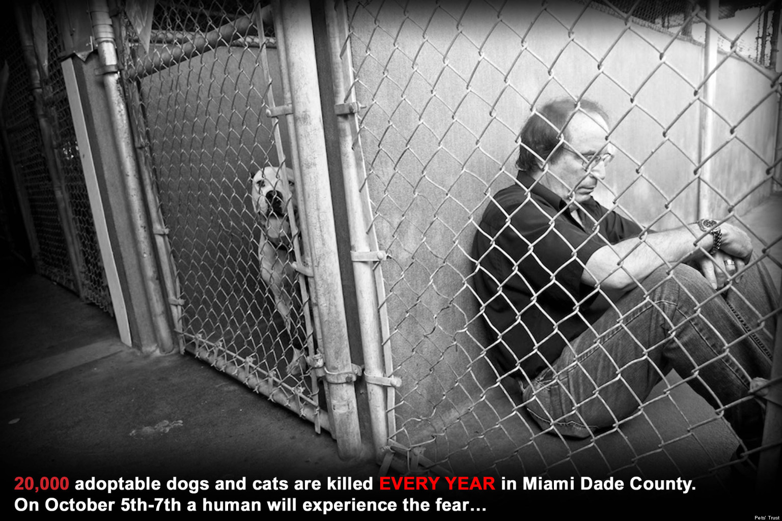 Miami Animal Adoption Michael Rosenberg To Sit In Dog Cages For