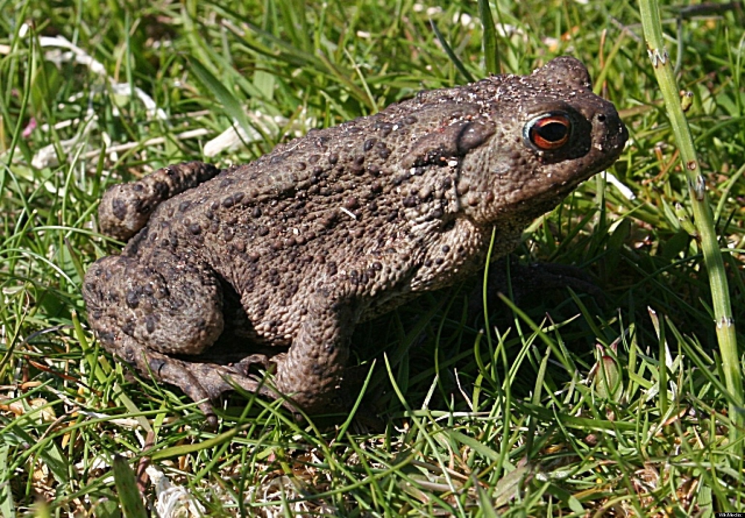 Cane Toads And Small Dogs