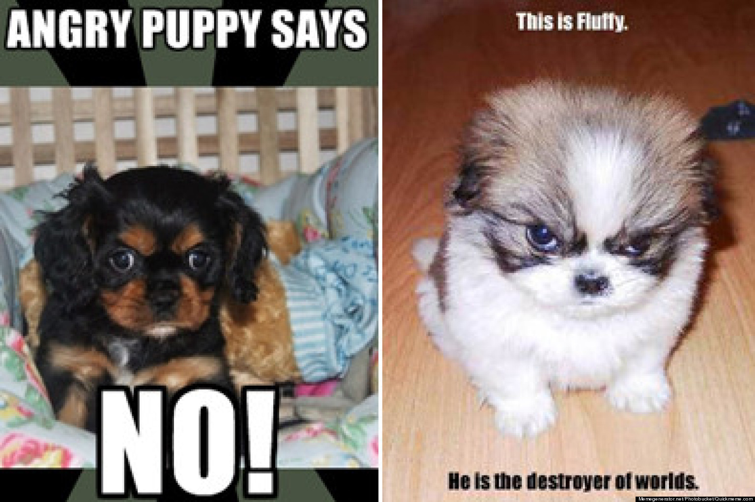o ANGRY PUPPY MEME facebook photos cutest angry puppy meme contest huffpost