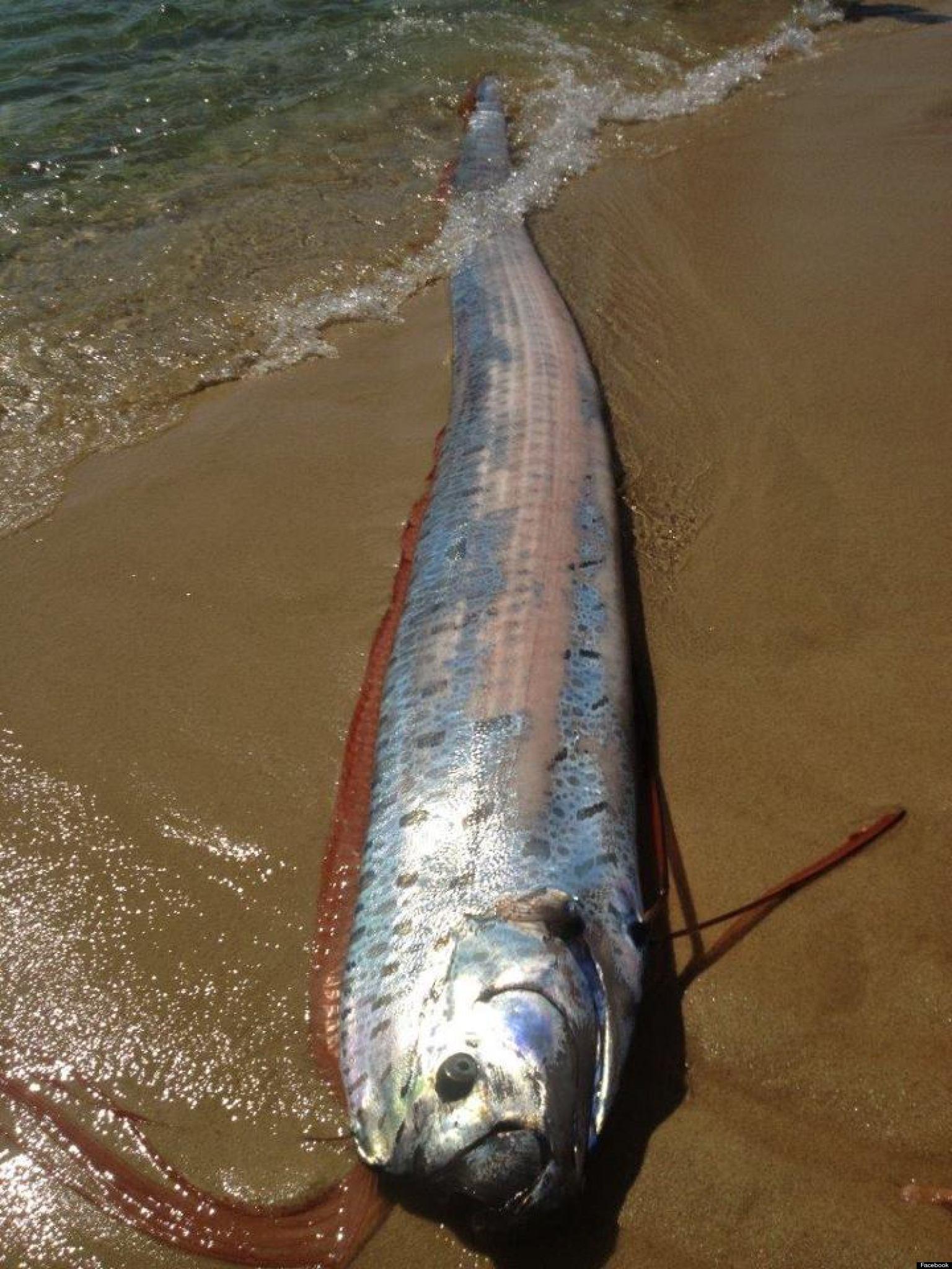 Foto ular raksasa di laut merah 78