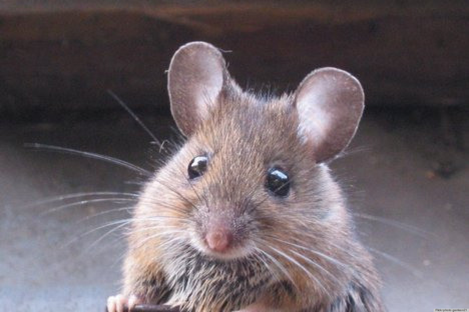My Own Private S Why I Ll No Longer Let Mouse Phobia Ruin Life Or Apartment Huffpost