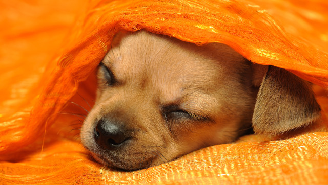 Should Our Puppy Sleep With Us Or Be Banned From The Bedroom - Puppies sleeping