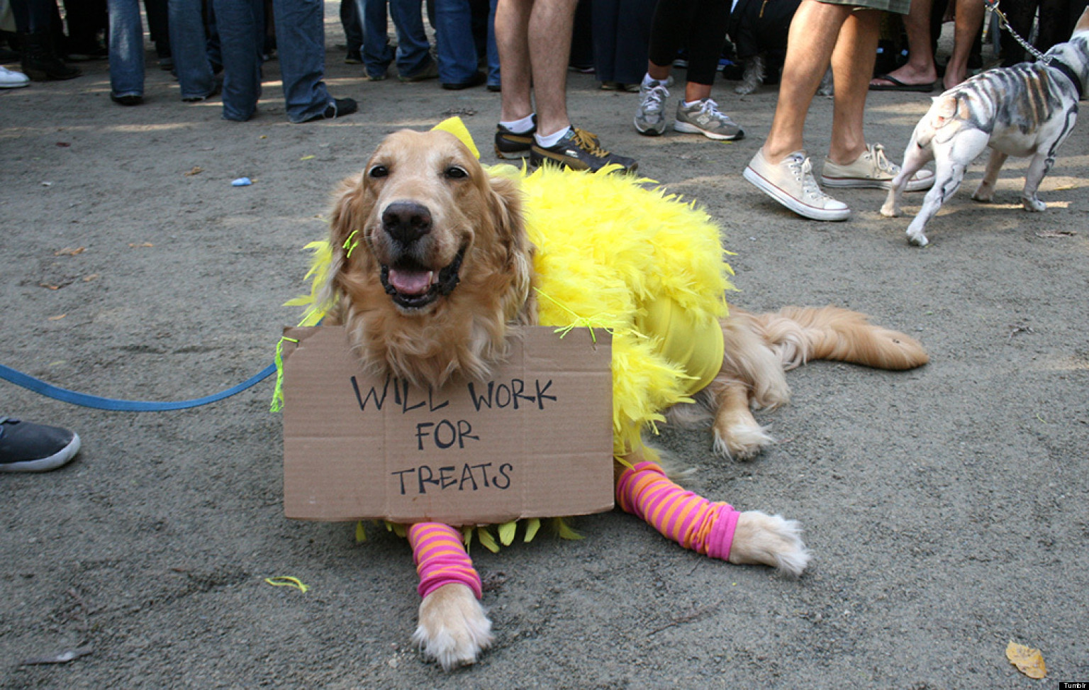 The Funniest Pet Halloween Costumes Submit Your Own PHOTOS