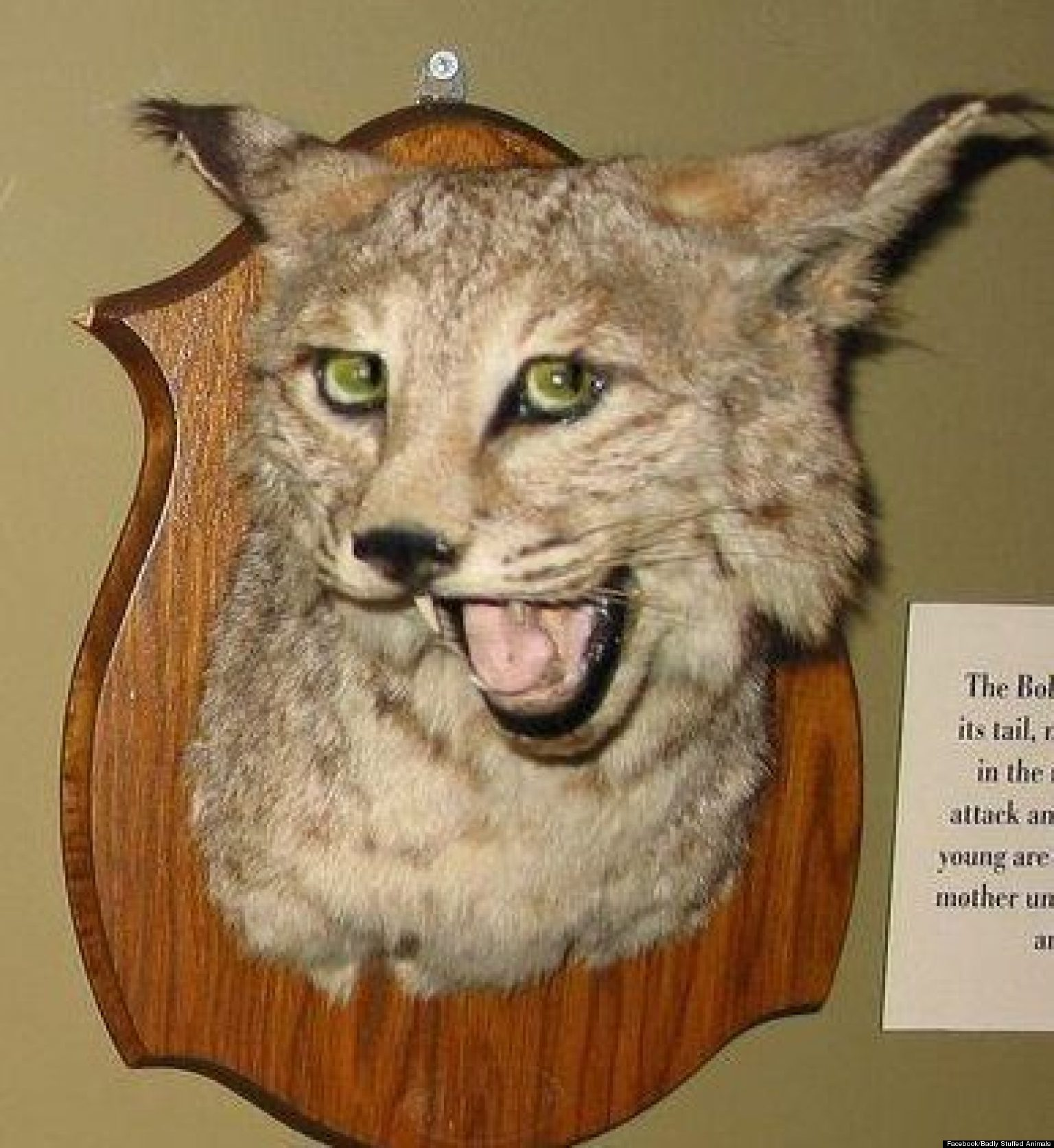 Hilariously Bad Taxidermy Celebrated On Facebook Where Badly