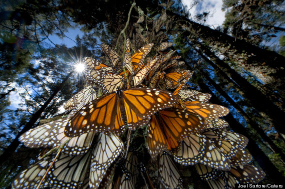 0_butterfly migration1_1353541