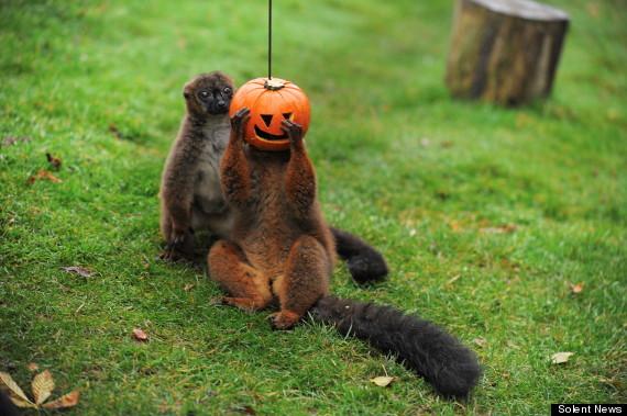 pumpkin animals