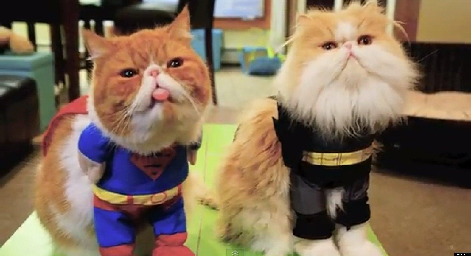 Фото супергерой кот