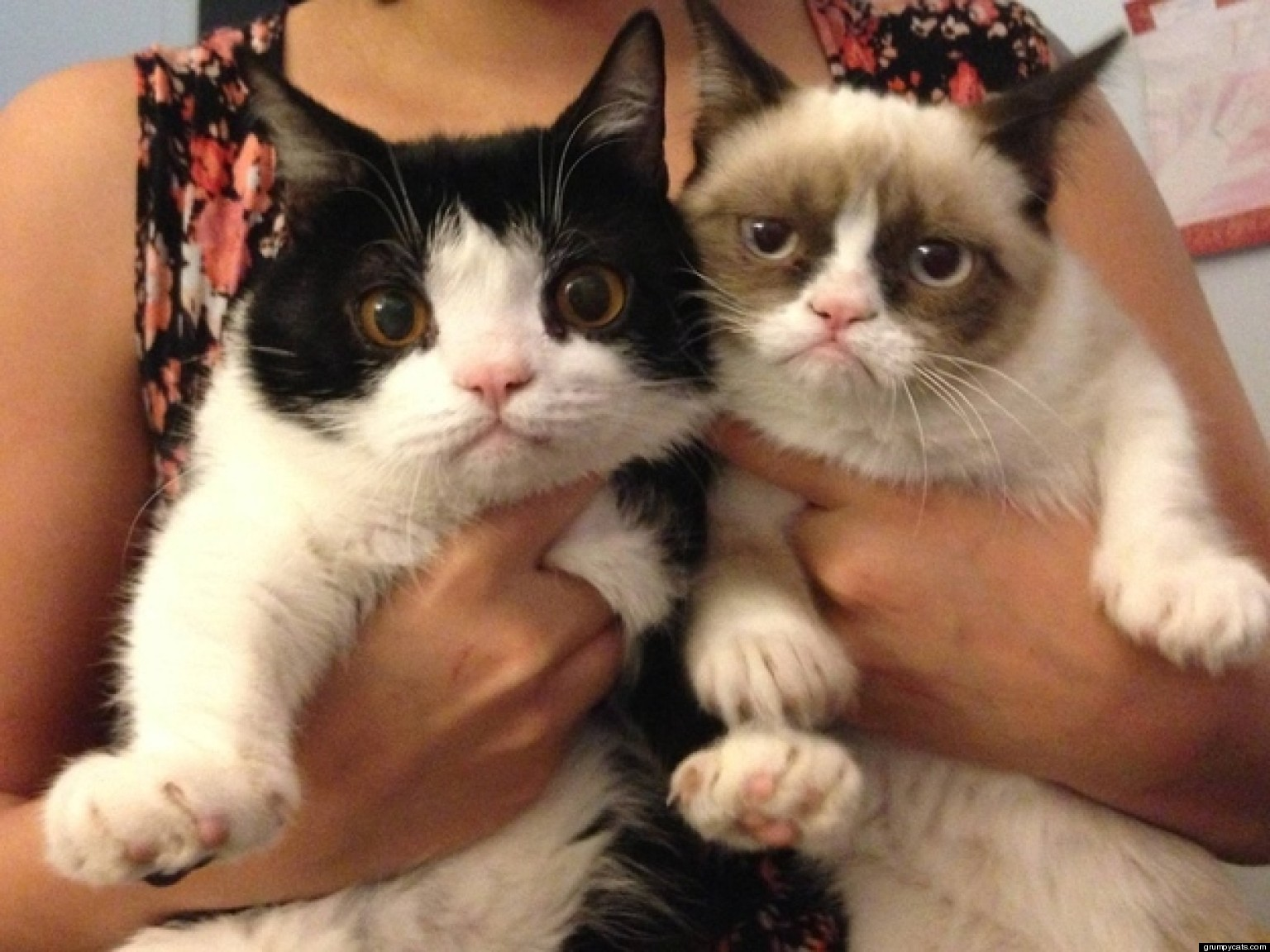Grumpy Cat And Pokey Videos