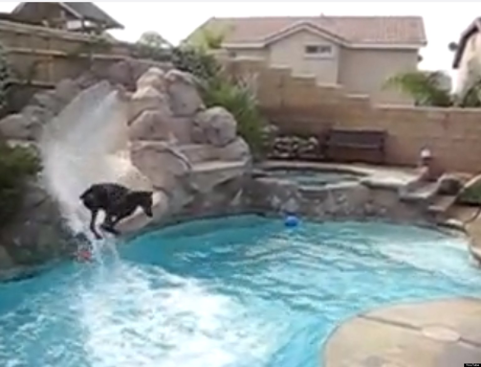doberman has fun on a pool slide cute ridiculous animal thing of