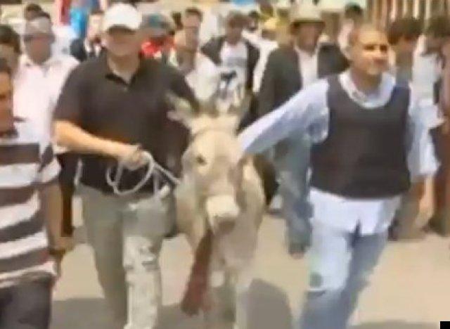 ecuador donkey