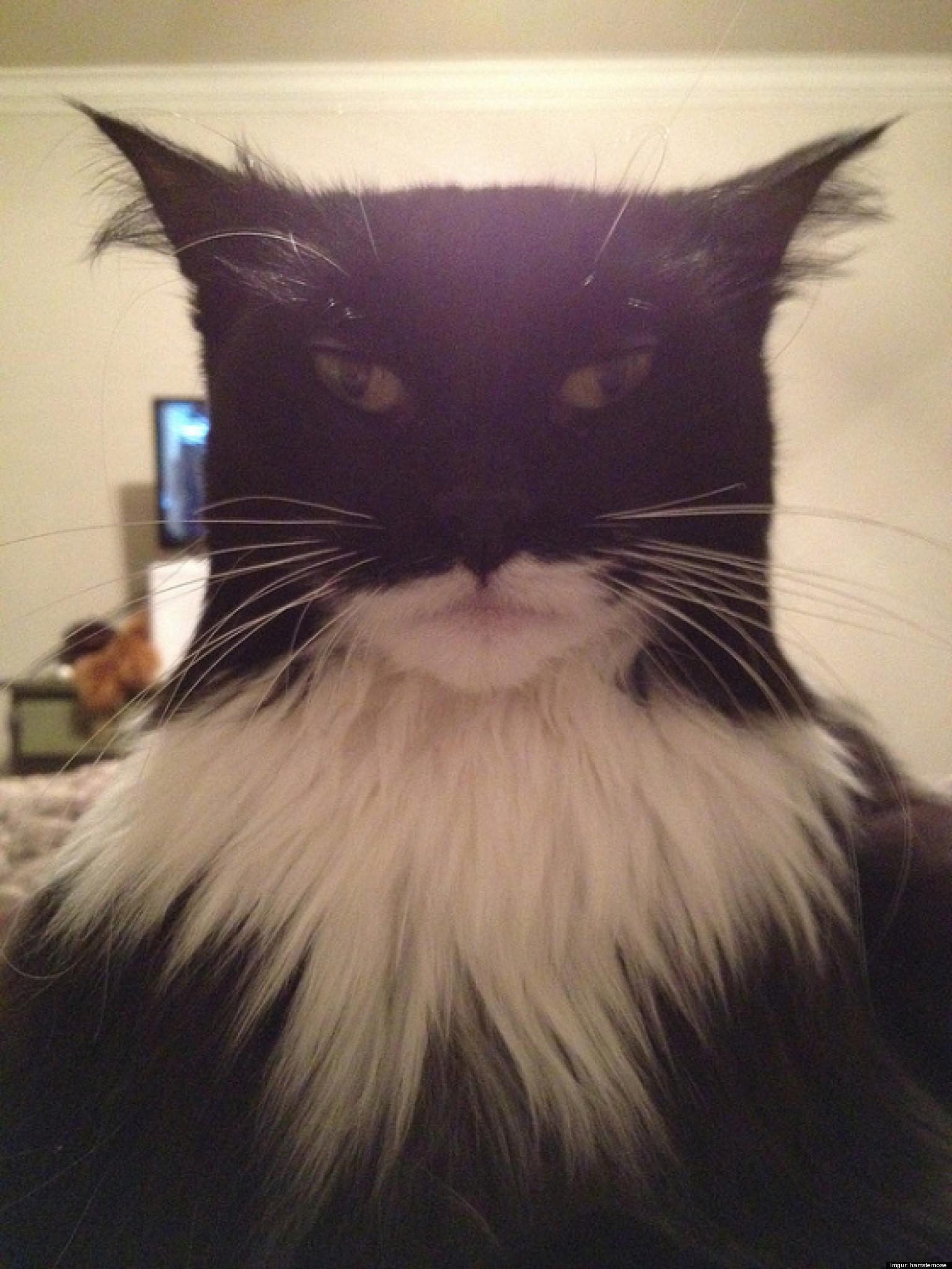 mean looking cat on facebook